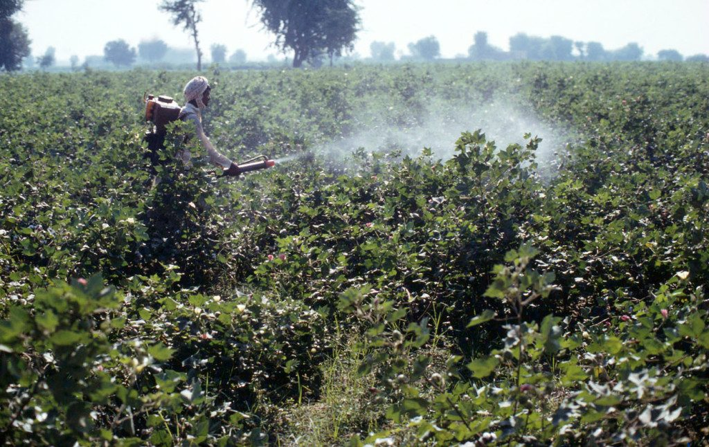 Pesticides spraying in cotton field. Pirawalla on the Punjab Plains Pakistan
