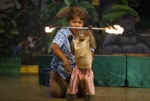 Maimuta foc danseaza radina zoologica Bangkok Thailanda