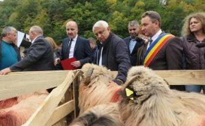Ministru care se înțelege cu oile »